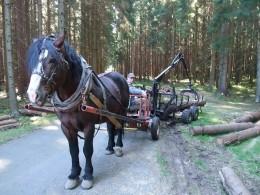 Vyvážečka za koně