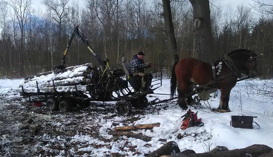 Kůň a vyvážečka